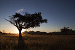 Namibia, tree